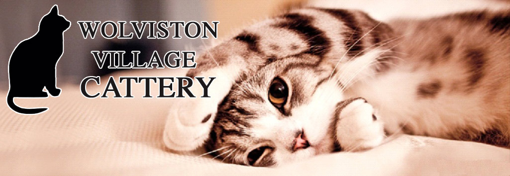 Luxury Cattery in Middlesbrough - Wolviston Cattery